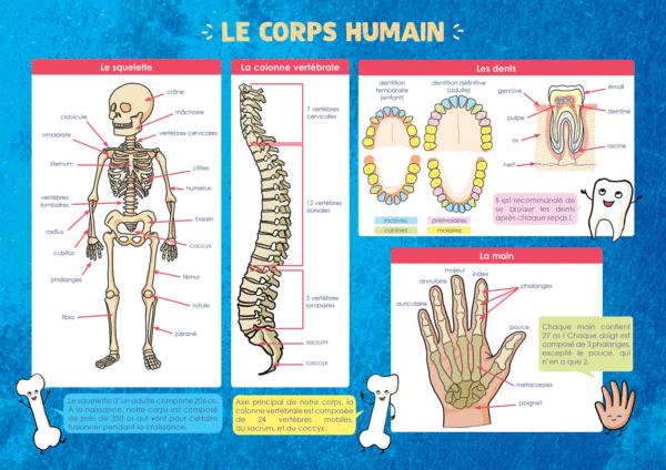 Les Posters de l'école - Lecorps humain