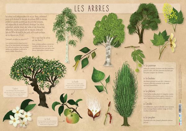Les Posters de l'école - Les arbres