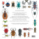 Insectes : coléoptères